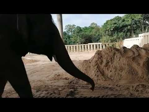 The Loneliest Elephant In The World